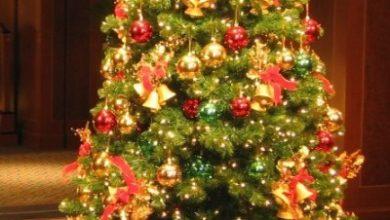 شجرة عيد ميلاد
