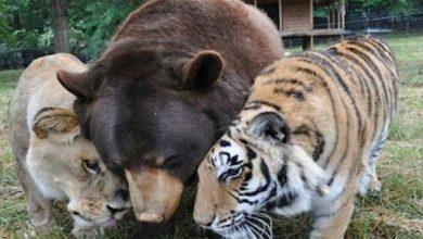 صور حيوانات مفترسة