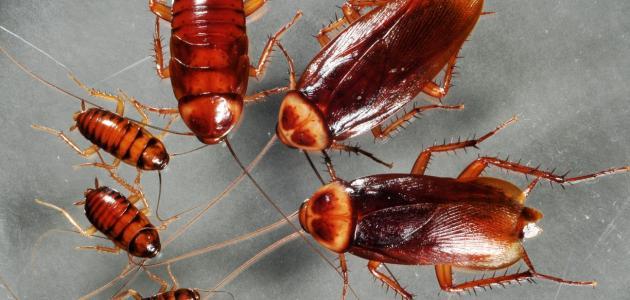 القضاء علي النمل والصراصير