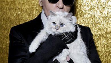 أغنى قطة في العالم